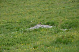 Marmotte-Dévoluy-Randonnée